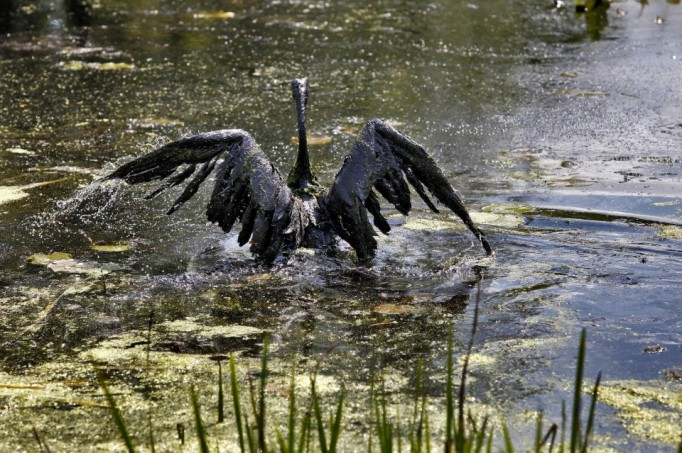 kalamazoo-river-oil-spill-fifth-anniversary-0f7d0829c53901a1